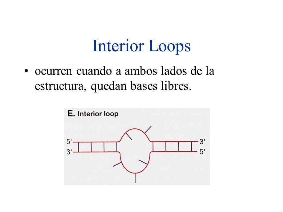 Interior Loops ocurren cuando a ambos lados de la estructura, quedan bases libres.