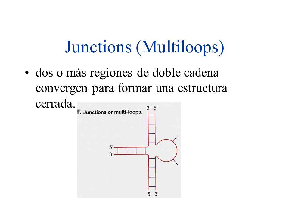 Junctions (Multiloops) dos o más regiones de doble cadena convergen para formar una estructura cerrada.