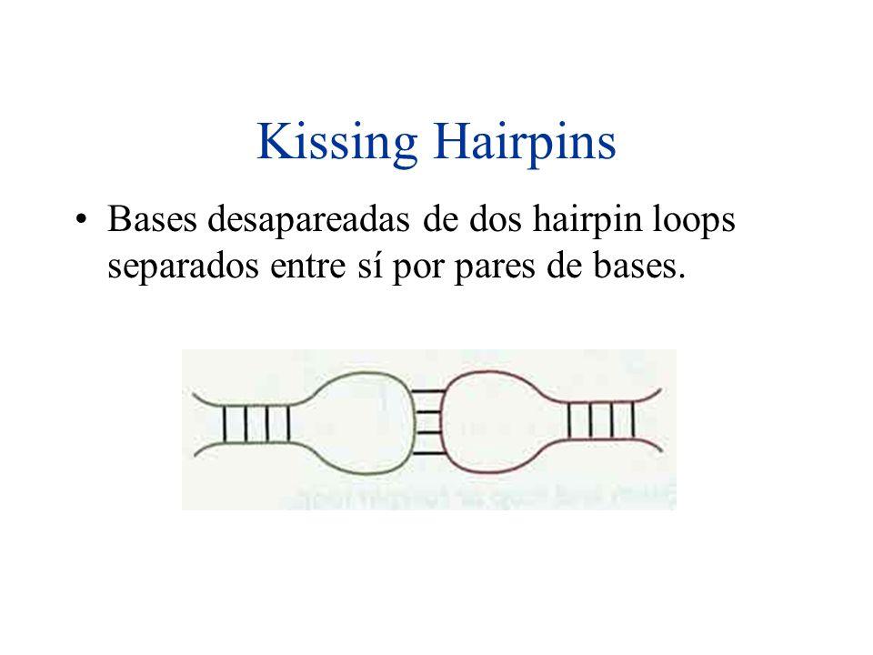 Kissing Hairpins Bases desapareadas de dos hairpin loops separados entre sí por pares de bases.