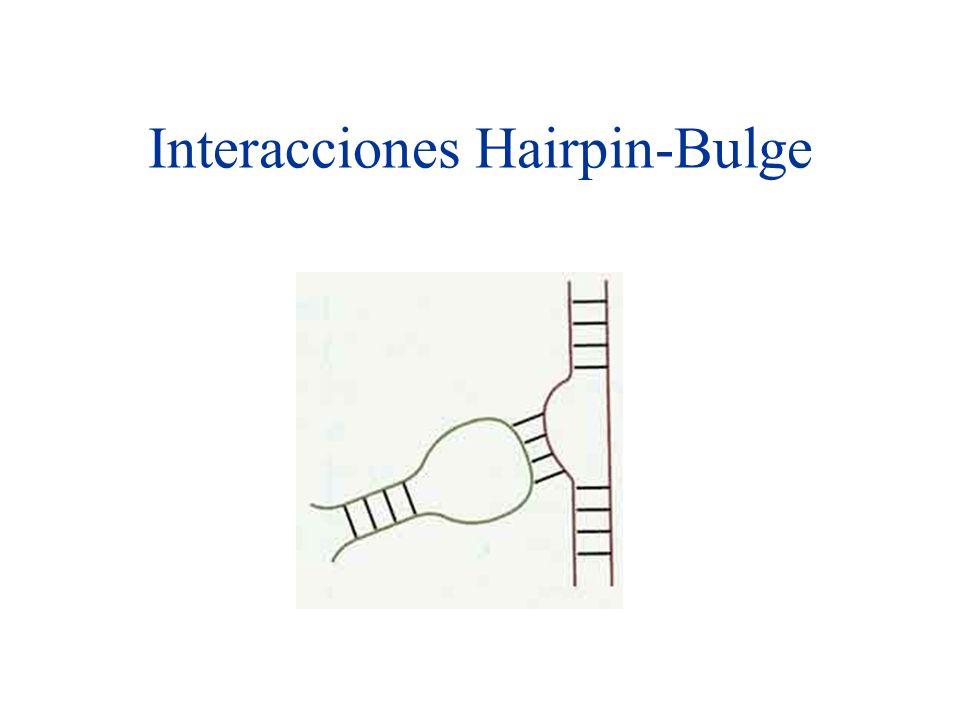 Interacciones Hairpin-Bulge