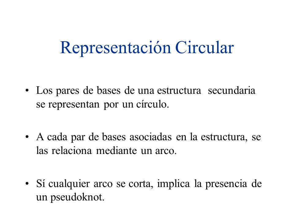 Representación Circular Los pares de bases de una estructura secundaria se representan por un círculo. A cada par de bases asociadas en la estructura,
