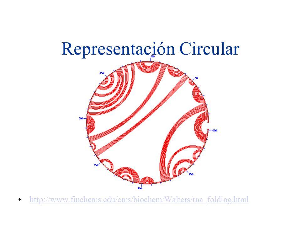 Representación Circular http://www.finchcms.edu/cms/biochem/Walters/rna_folding.html