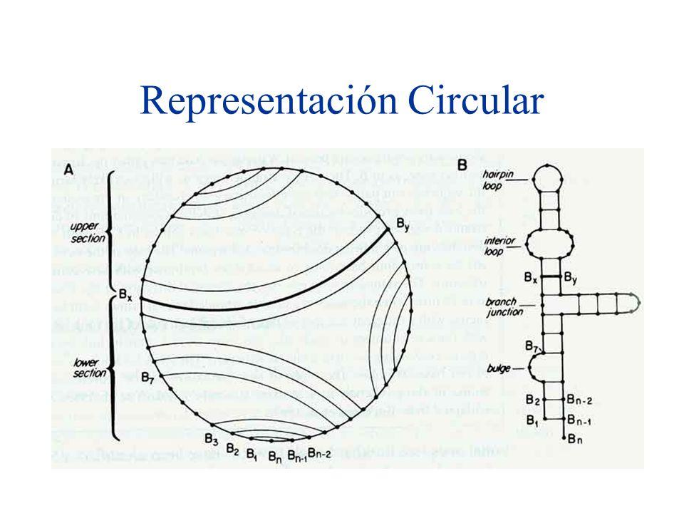 Representación Circular