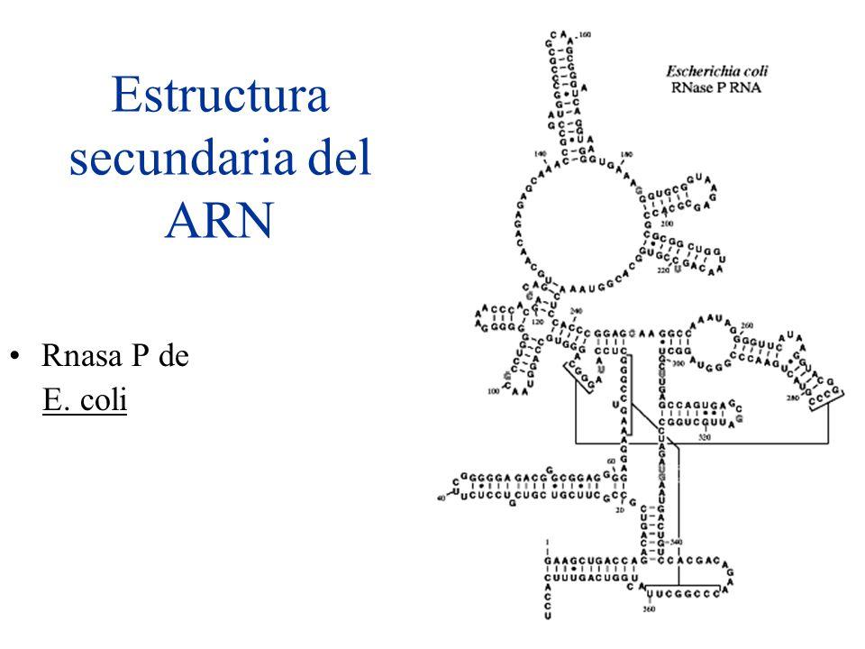 Estructura secundaria del ARN Rnasa P de E. coli