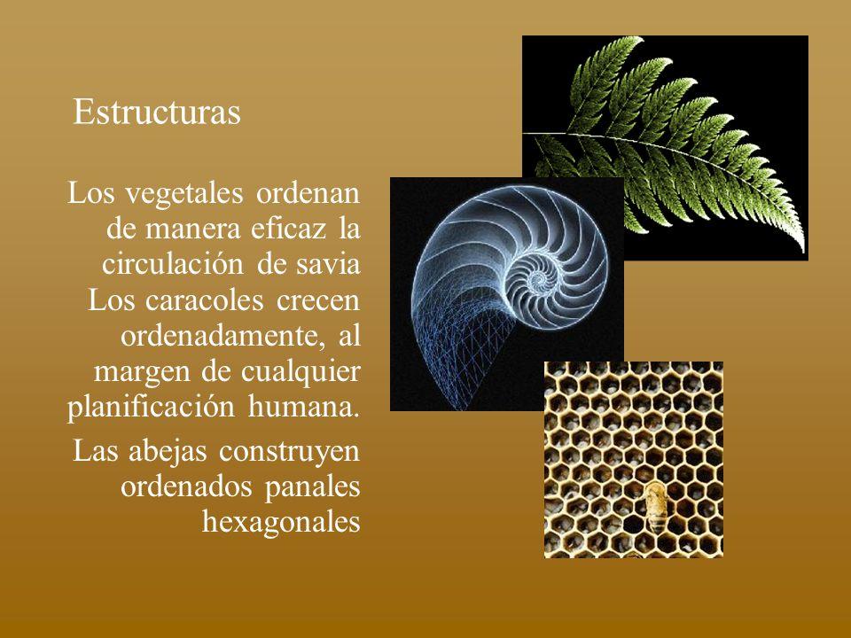 Estructuras Los vegetales ordenan de manera eficaz la circulación de savia Los caracoles crecen ordenadamente, al margen de cualquier planificación hu