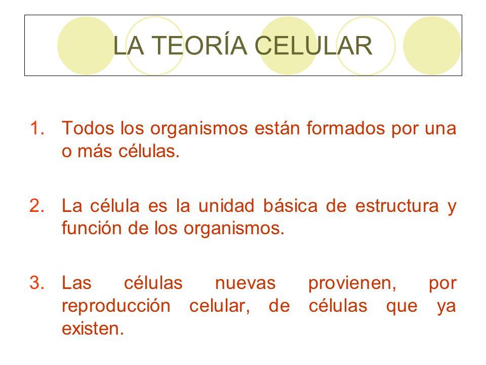 LA TEORÍA CELULAR 1.Todos los organismos están formados por una o más células. 2.La célula es la unidad básica de estructura y función de los organism
