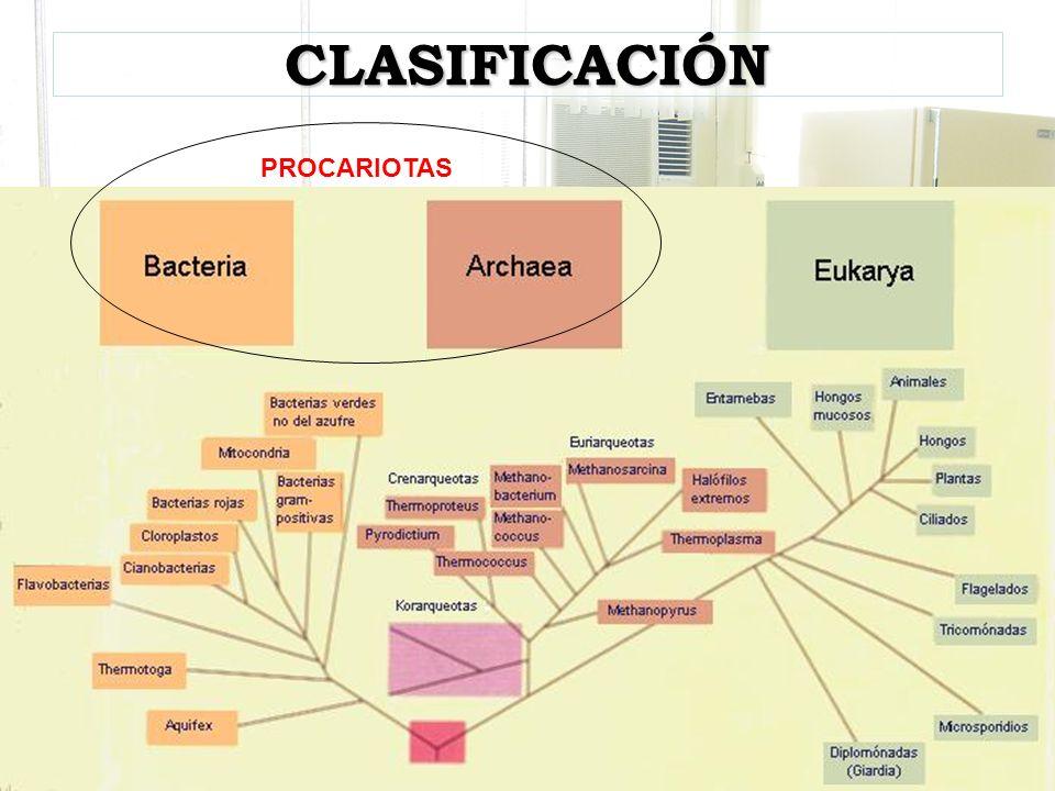 GENERALIDADES Bacteria: bacterium = bastón Características –Procariota: pro=primitivo, karyon=núcleo –Ribosoma 70S –Pared bacteriana –Ausencia de esteroles –Ausencia de mitocondrias, RE, AG –Órganos de Movilidad –Cromosoma único –Plásmidos