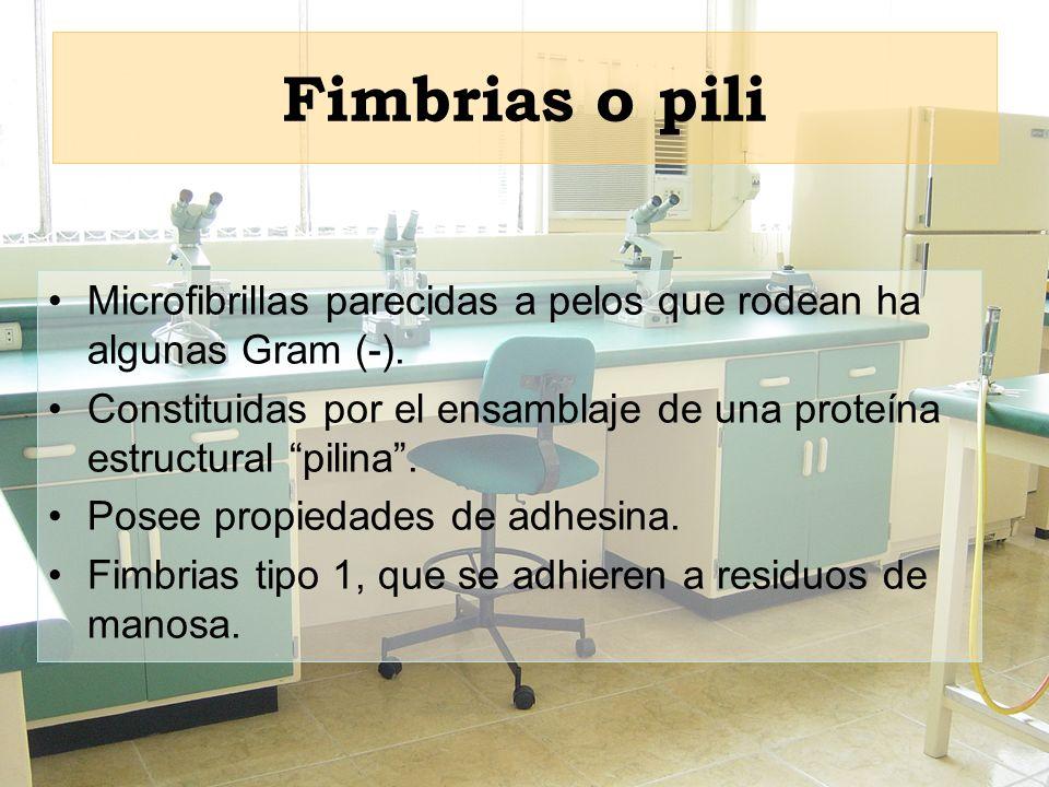 Fimbrias o pili Microfibrillas parecidas a pelos que rodean ha algunas Gram (-). Constituidas por el ensamblaje de una proteína estructural pilina. Po