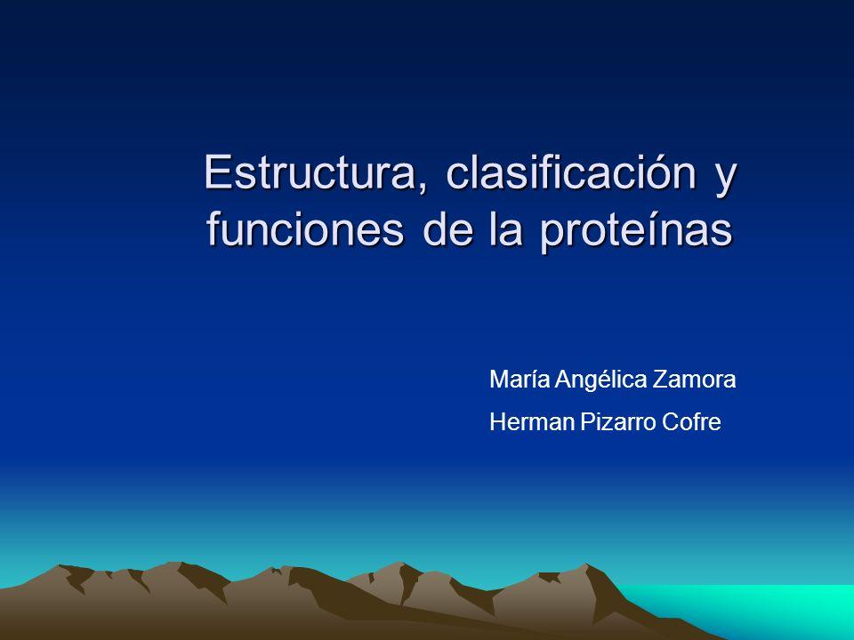 Estructura, clasificación y funciones de la proteínas María Angélica Zamora Herman Pizarro Cofre