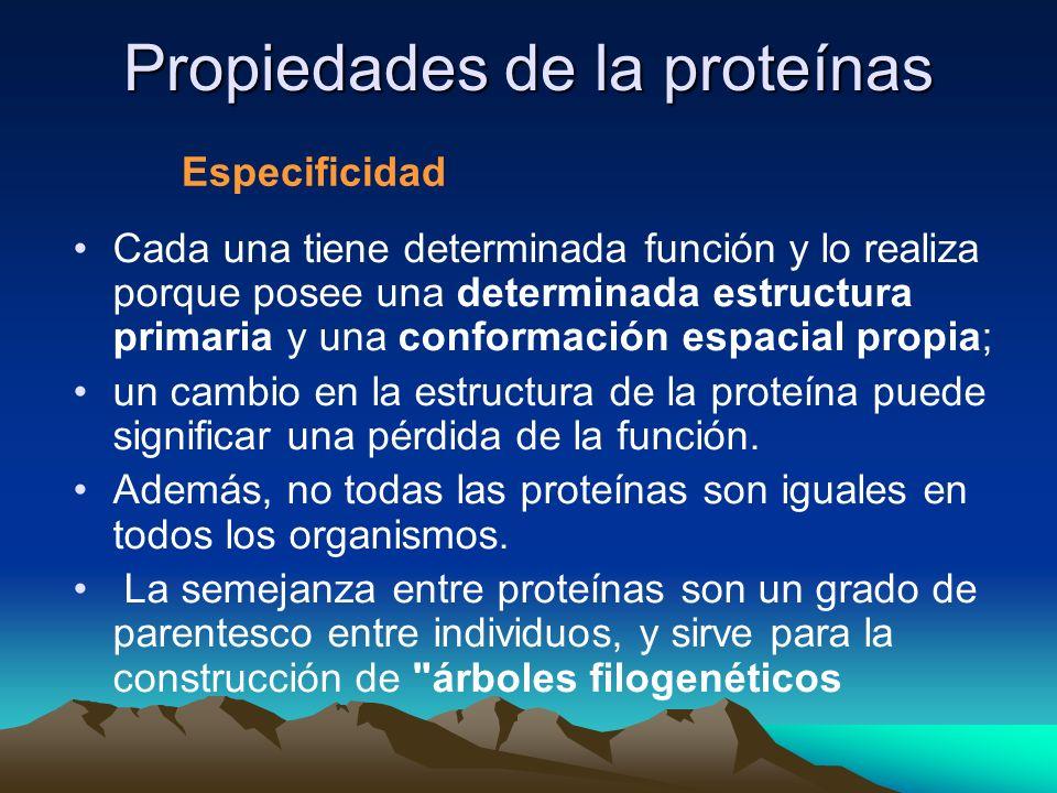 Propiedades de la proteínas Cada una tiene determinada función y lo realiza porque posee una determinada estructura primaria y una conformación espacial propia; un cambio en la estructura de la proteína puede significar una pérdida de la función.