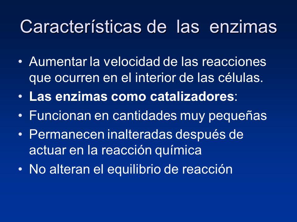 Características de las enzimas Aumentar la velocidad de las reacciones que ocurren en el interior de las células. Las enzimas como catalizadores: Func