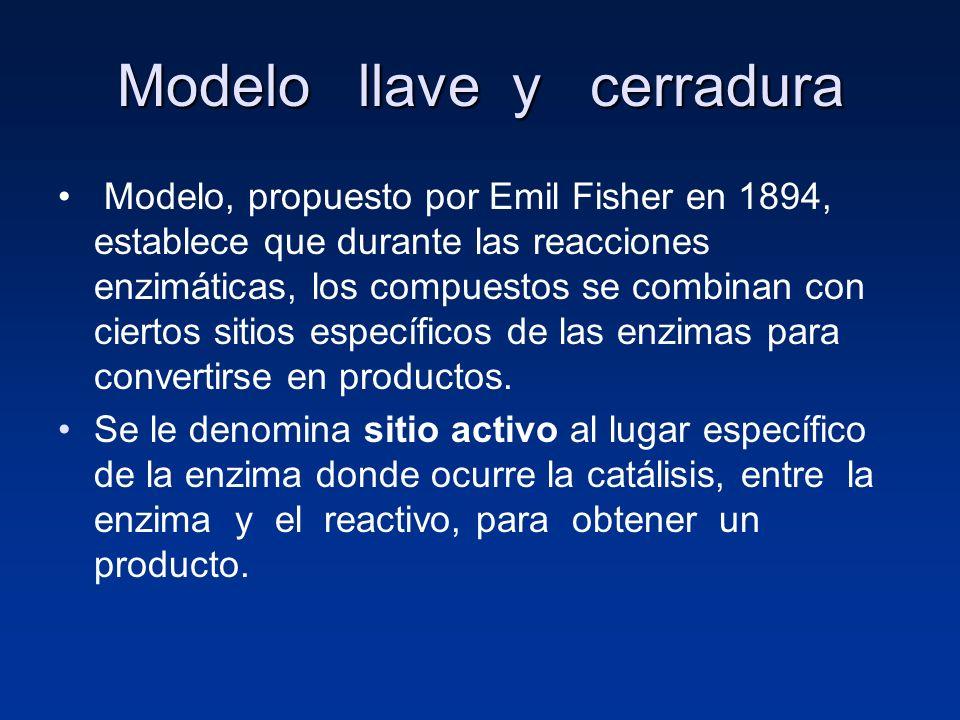 Modelo llave y cerradura Modelo, propuesto por Emil Fisher en 1894, establece que durante las reacciones enzimáticas, los compuestos se combinan con c
