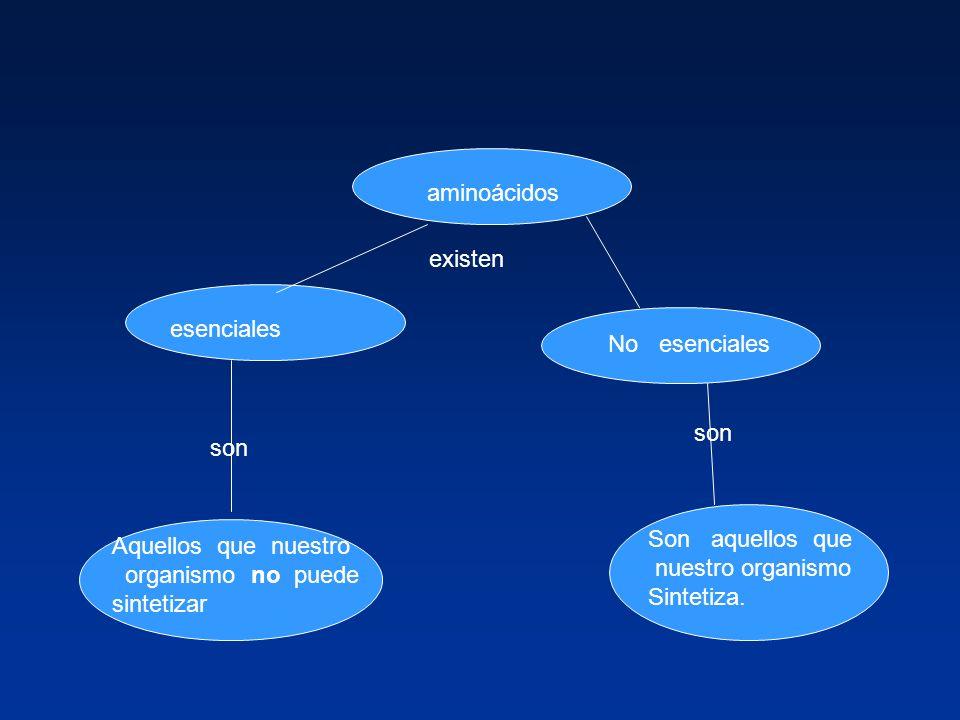 aminoácidos existen esenciales No esenciales son Aquellos que nuestro organismo no puede sintetizar Son aquellos que nuestro organismo Sintetiza.