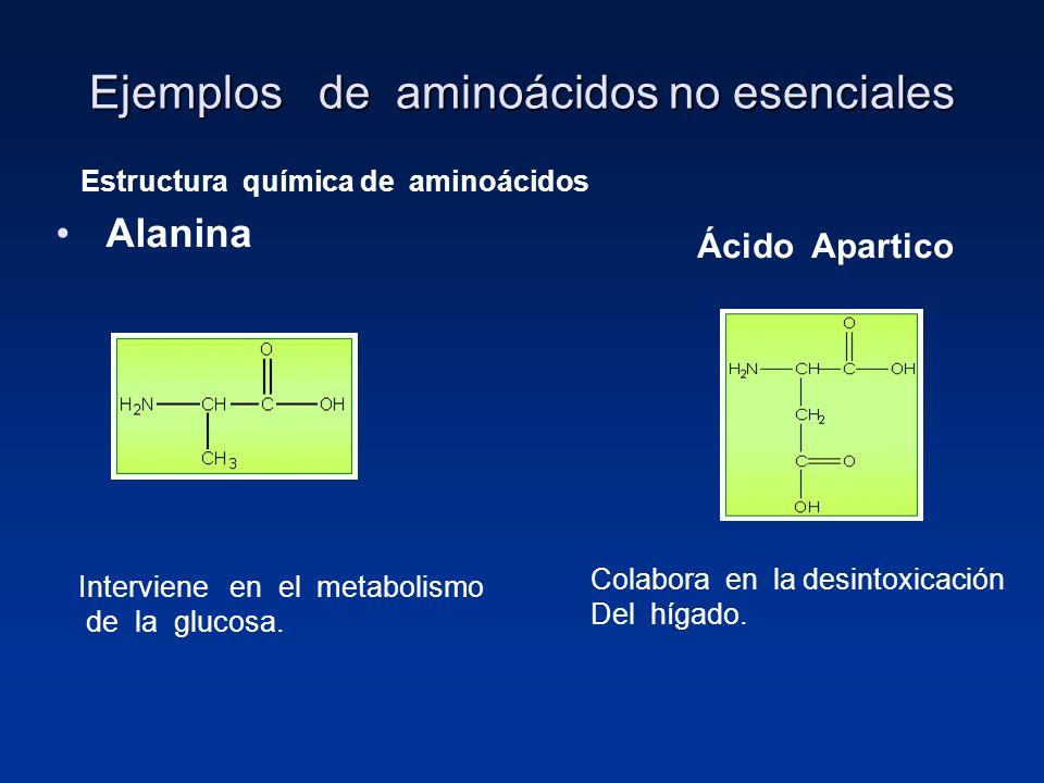 Ejemplos de aminoácidos no esenciales Alanina Estructura química de aminoácidos Interviene en el metabolismo de la glucosa. Ácido Apartico Colabora en