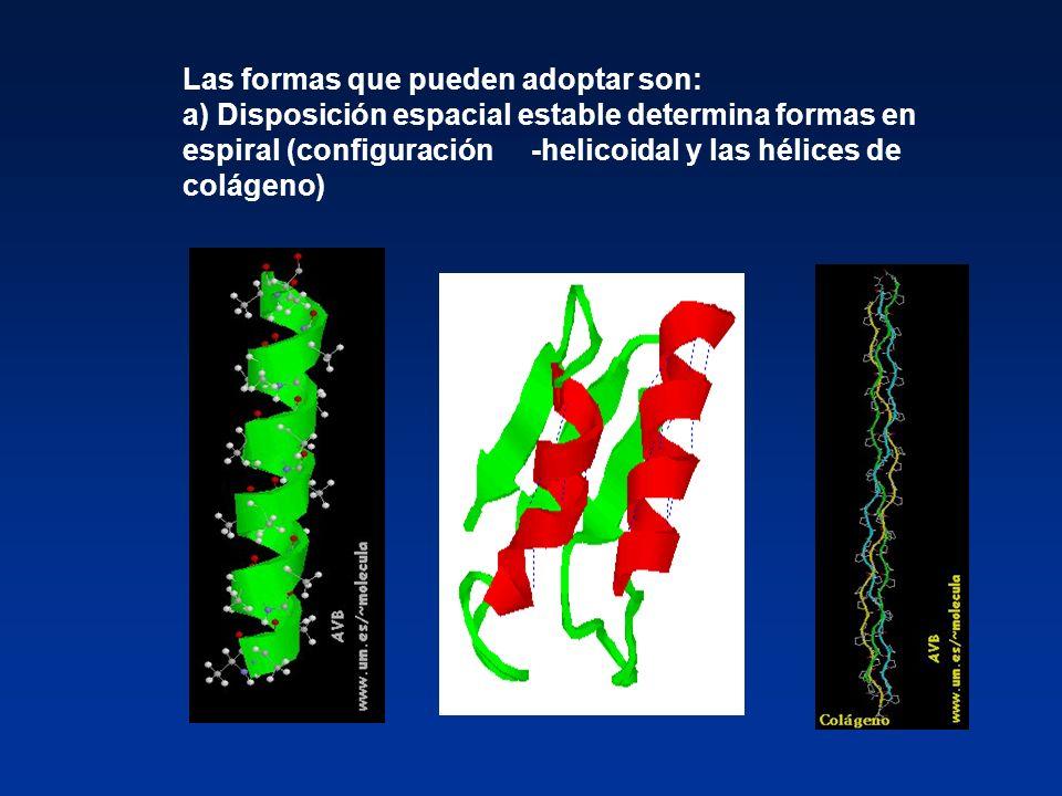 Las formas que pueden adoptar son: a) Disposición espacial estable determina formas en espiral (configuración -helicoidal y las hélices de colágeno)