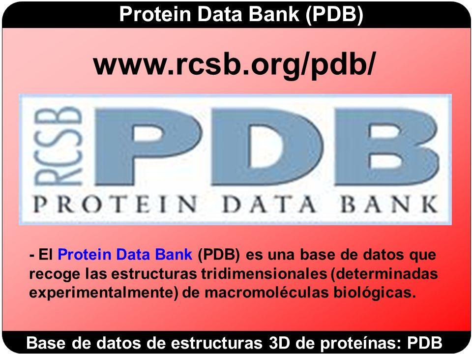 Protein Data Bank (PDB) Base de datos de estructuras 3D de proteínas: PDB www.rcsb.org/pdb/ - El Protein Data Bank (PDB) es una base de datos que recoge las estructuras tridimensionales (determinadas experimentalmente) de macromoléculas biológicas.