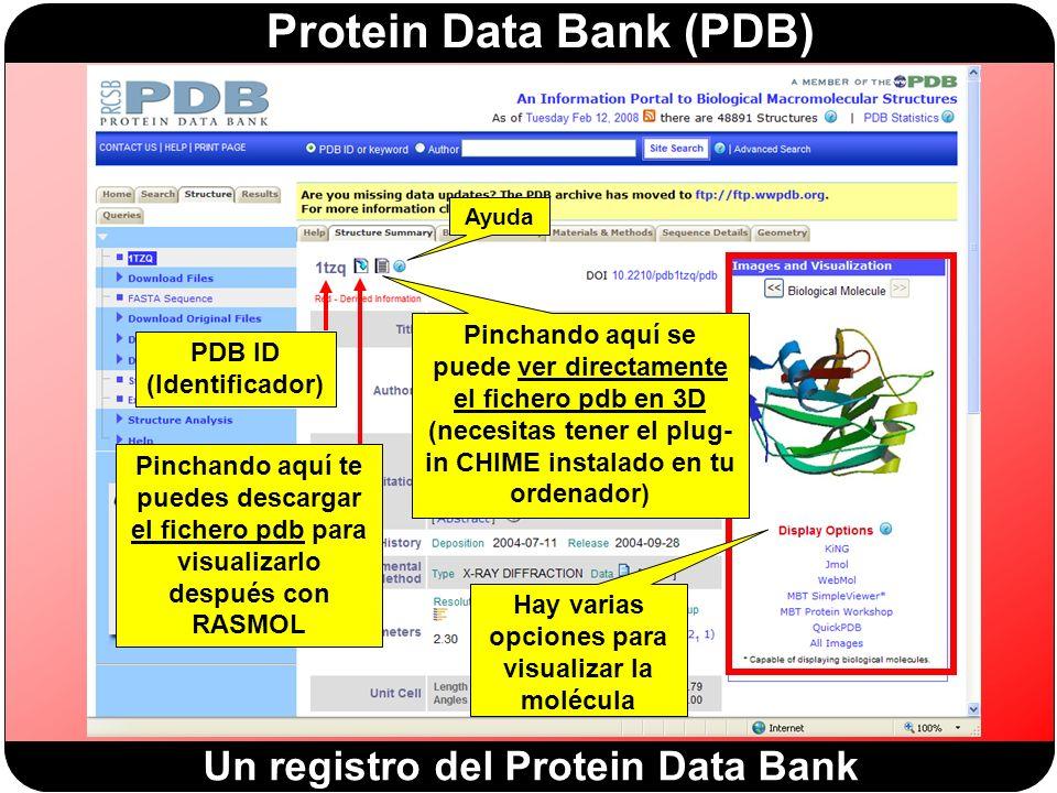 Protein Data Bank (PDB) Un registro del Protein Data Bank PDB ID (Identificador) Pinchando aquí te puedes descargar el fichero pdb para visualizarlo después con RASMOL Ayuda Pinchando aquí se puede ver directamente el fichero pdb en 3D (necesitas tener el plug- in CHIME instalado en tu ordenador) Hay varias opciones para visualizar la molécula