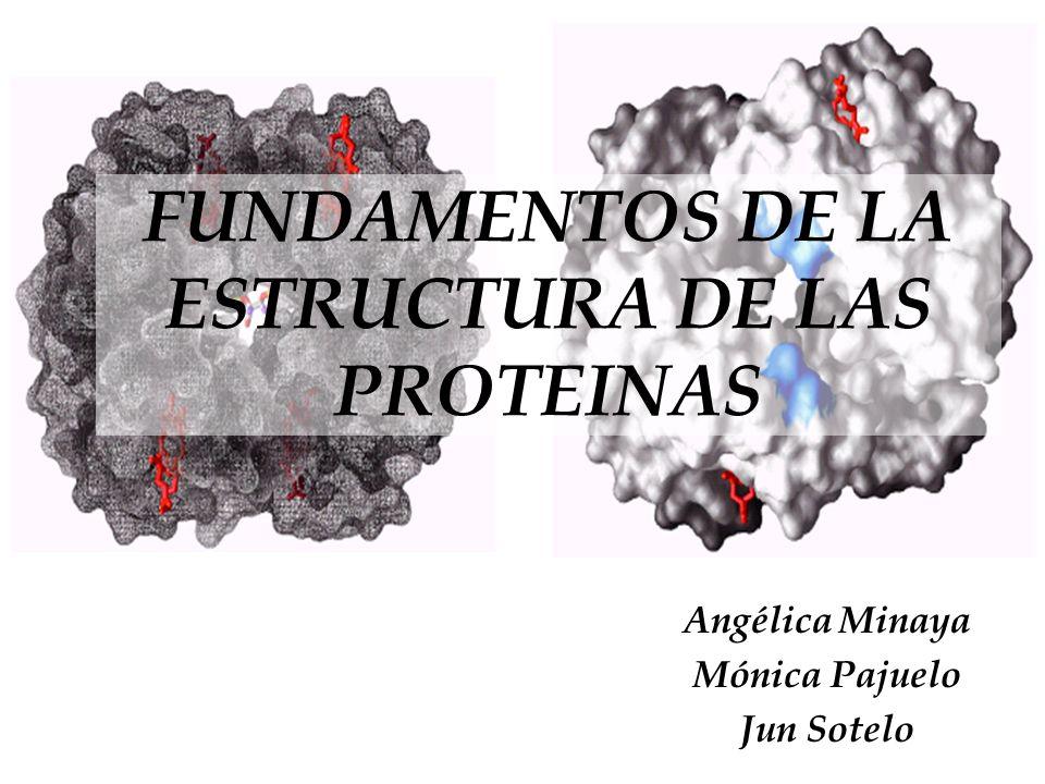 FUNDAMENTOS DE LA ESTRUCTURA DE LAS PROTEINAS Angélica Minaya Mónica Pajuelo Jun Sotelo