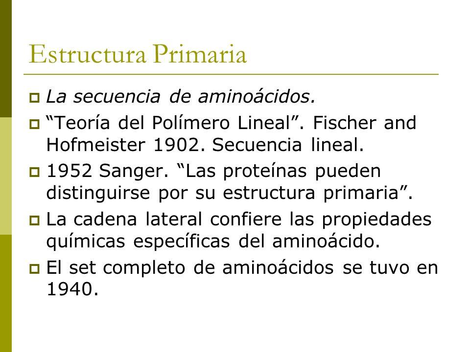 Estructura Primaria La secuencia de aminoácidos. Teoría del Polímero Lineal. Fischer and Hofmeister 1902. Secuencia lineal. 1952 Sanger. Las proteínas