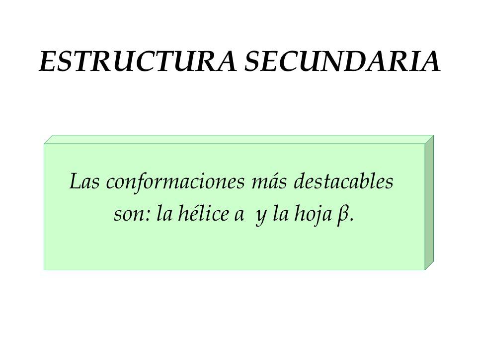 Las conformaciones más destacables son: la hélice α y la hoja β.