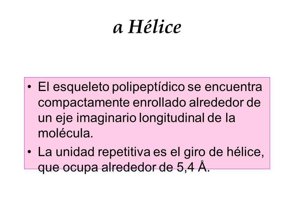 α Hélice El esqueleto polipeptídico se encuentra compactamente enrollado alrededor de un eje imaginario longitudinal de la molécula. La unidad repetit
