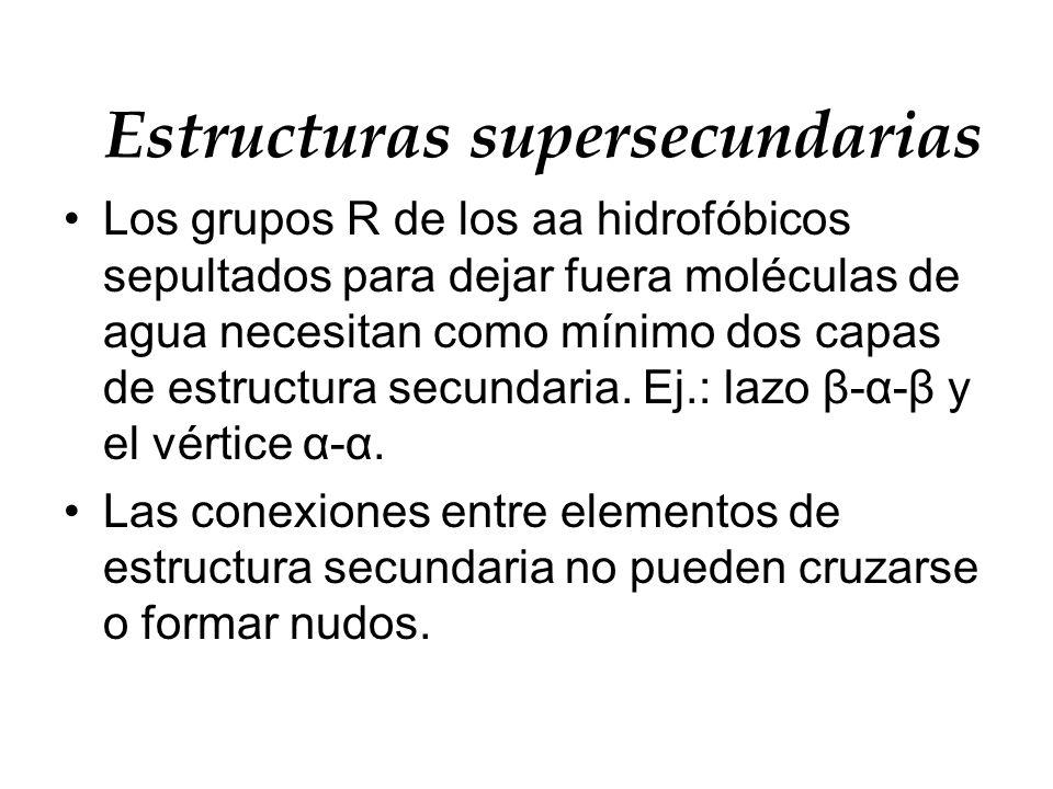 Estructuras supersecundarias Los grupos R de los aa hidrofóbicos sepultados para dejar fuera moléculas de agua necesitan como mínimo dos capas de estr