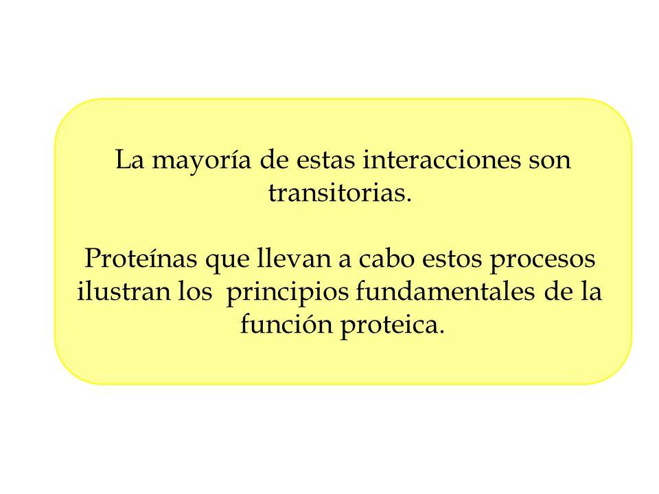 La mayoría de estas interacciones son transitorias. Proteínas que llevan a cabo estos procesos ilustran los principios fundamentales de la función pro