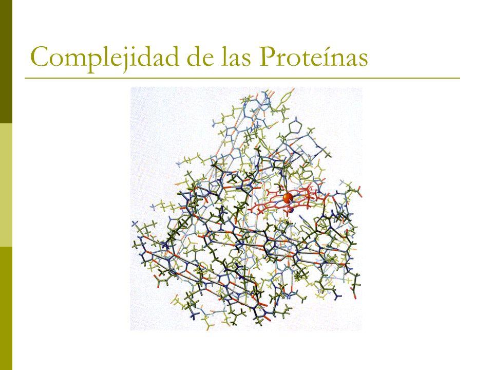 Estructuras supersecundarias Los grupos R de los aa hidrofóbicos sepultados para dejar fuera moléculas de agua necesitan como mínimo dos capas de estructura secundaria.