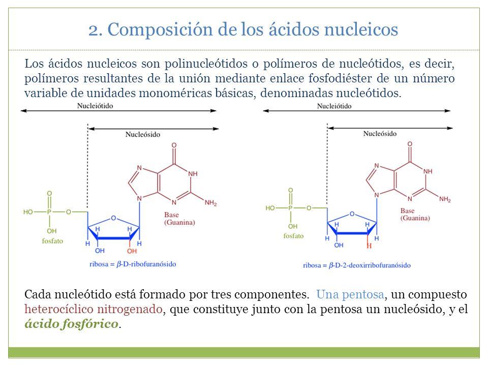 Pentosa: Las pentosas son monosacáridos (glúcidos simples) formados por una cadena de cinco átomos de carbono.
