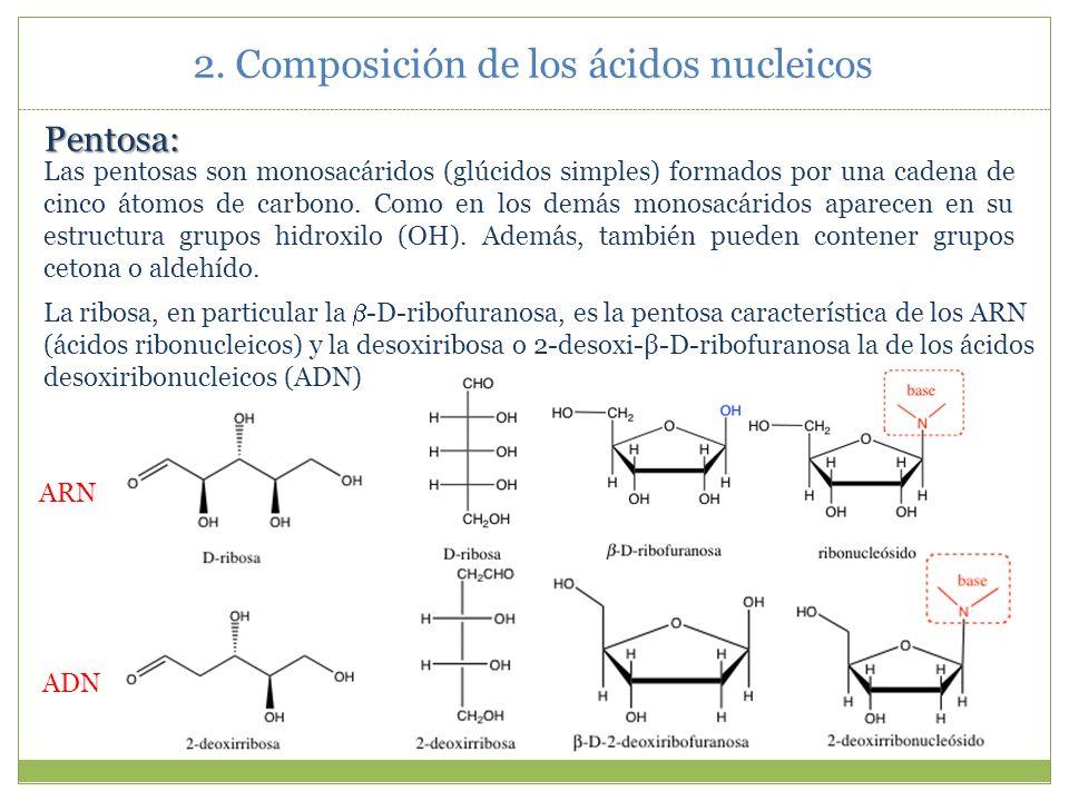 Principalmente a nivel estructural se pueden destacar tres diferencias: 1) El azúcar en el ARN es la ribosa en vez de la deoxirribosa del ADN.