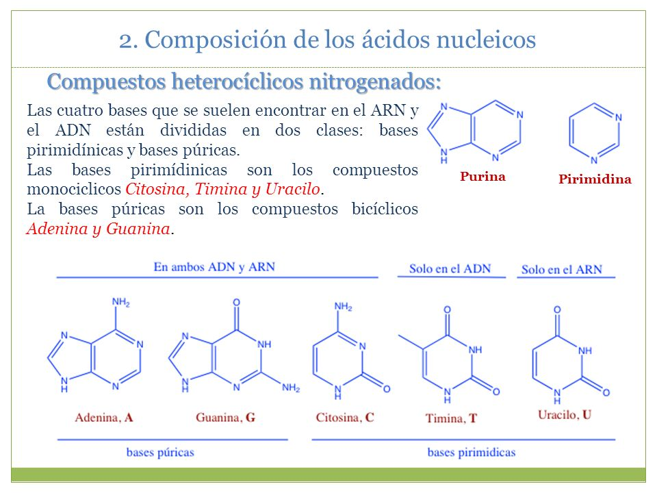 Los ribonucleósidos y desoxirribonucleósidos corrientes aparecen en las células no solamente en forma monofosfato, sino que también pueden aparecer en forma de 5 - difosfatos (con dos moléculas de fosfórico) o bien 5 -trifosfatos (con tres moléculas).