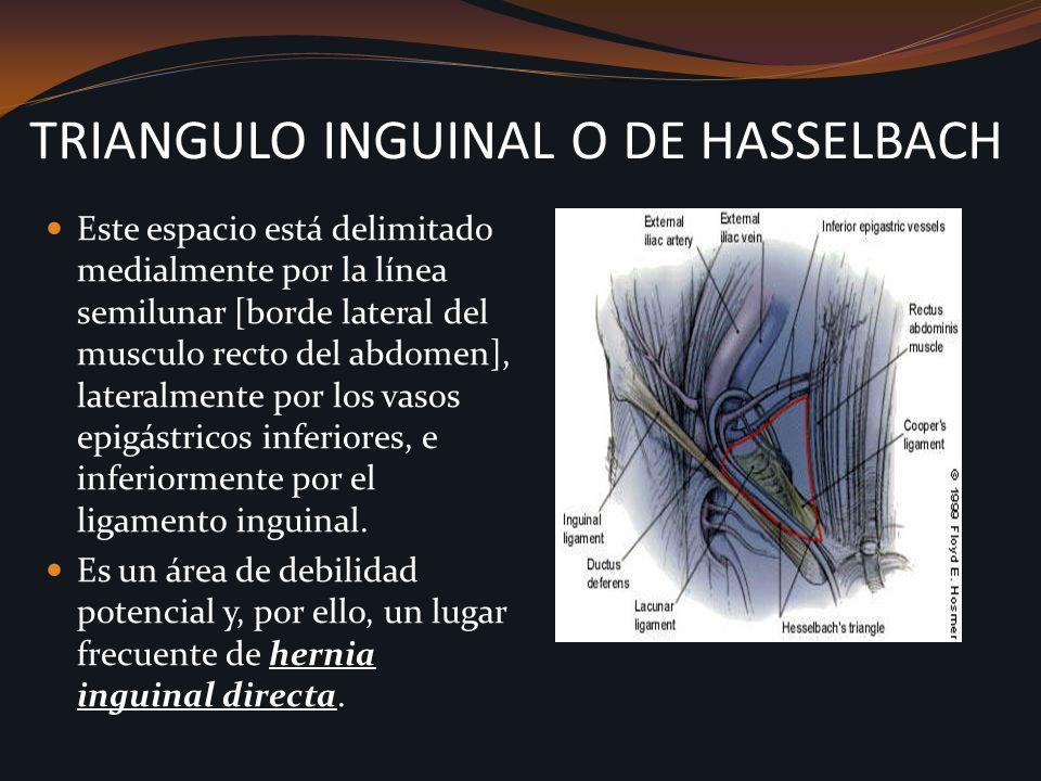 TRIANGULO INGUINAL O DE HASSELBACH Este espacio está delimitado medialmente por la línea semilunar [borde lateral del musculo recto del abdomen], late