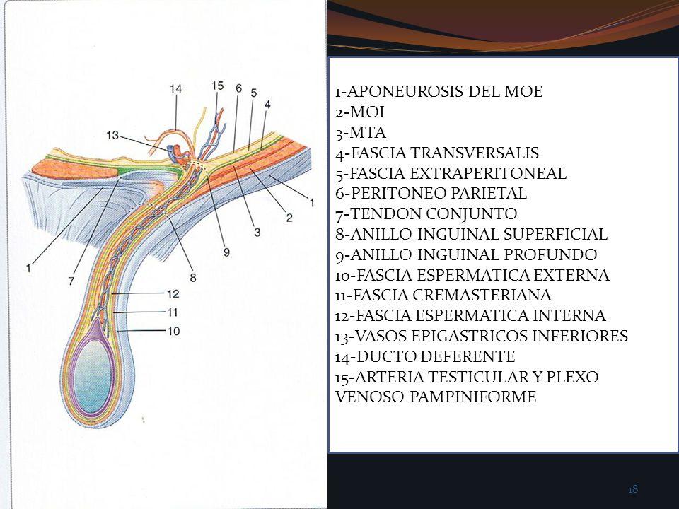 1-APONEUROSIS DEL MOE 2-MOI 3-MTA 4-FASCIA TRANSVERSALIS 5-FASCIA EXTRAPERITONEAL 6-PERITONEO PARIETAL 7-TENDON CONJUNTO 8-ANILLO INGUINAL SUPERFICIAL