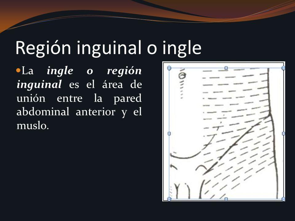 Región inguinal o ingle La ingle o región inguinal es el área de unión entre la pared abdominal anterior y el muslo.