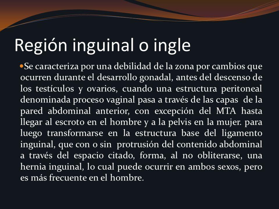 Región inguinal o ingle Se caracteriza por una debilidad de la zona por cambios que ocurren durante el desarrollo gonadal, antes del descenso de los t