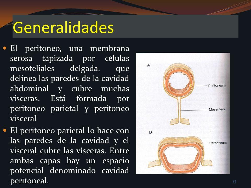Generalidades El peritoneo, una membrana serosa tapizada por células mesoteliales delgada, que delinea las paredes de la cavidad abdominal y cubre muc
