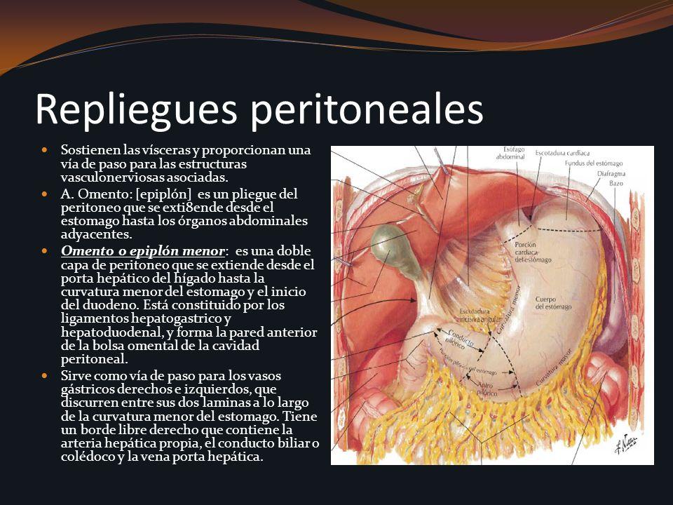 Repliegues peritoneales Sostienen las vísceras y proporcionan una vía de paso para las estructuras vasculonerviosas asociadas. A. Omento: [epiplón] es
