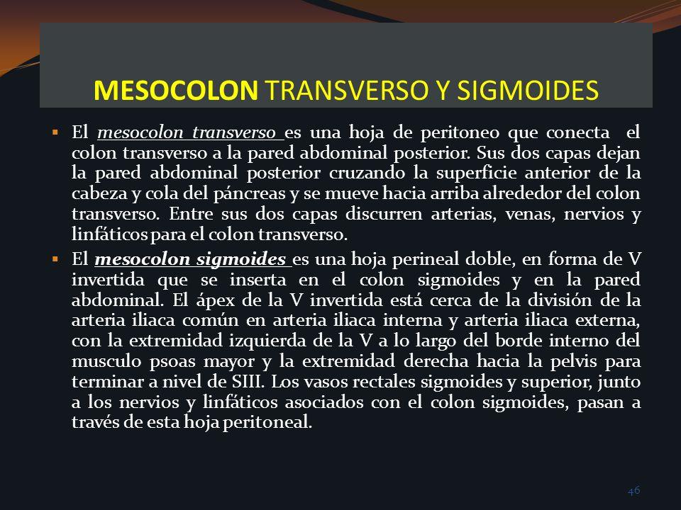 MESOCOLON TRANSVERSO Y SIGMOIDES El mesocolon transverso es una hoja de peritoneo que conecta el colon transverso a la pared abdominal posterior. Sus
