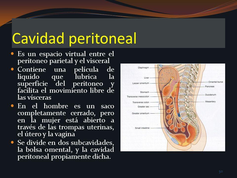 Cavidad peritoneal Es un espacio virtual entre el peritoneo parietal y el visceral Contiene una película de liquido que lubrica la superficie del peri