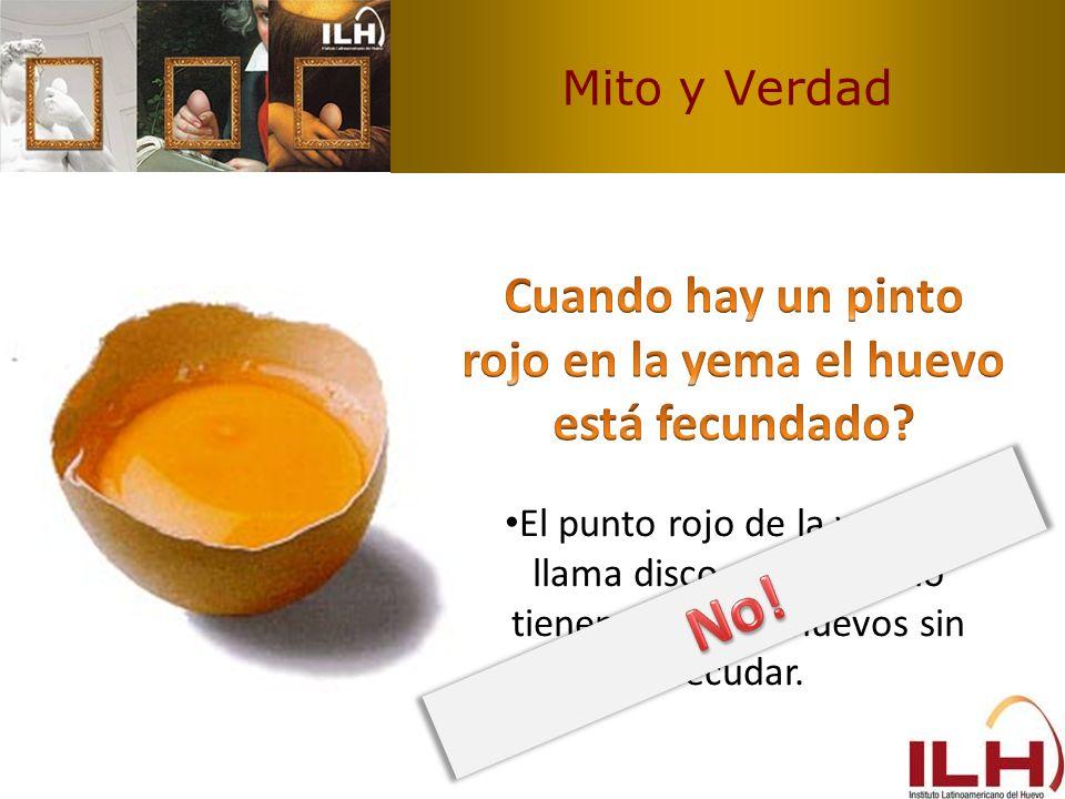 Mito y Verdad El punto rojo de la yema se llama disco germinal y lo tienen todos los huevos sin fecudar.