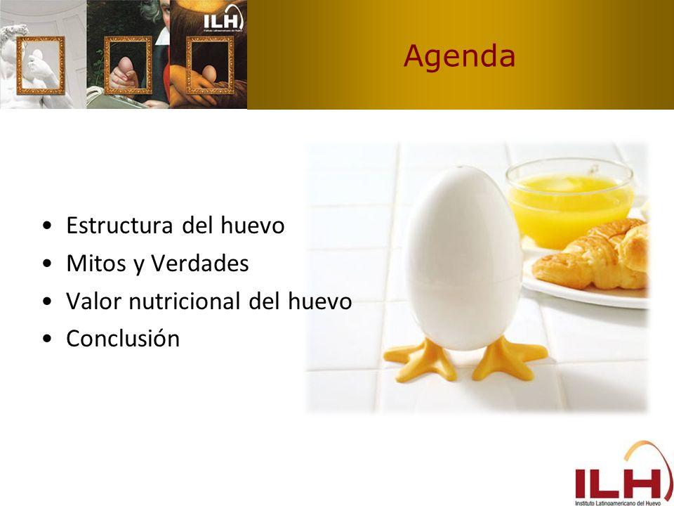 Agenda Estructura del huevo Mitos y Verdades Valor nutricional del huevo Conclusión