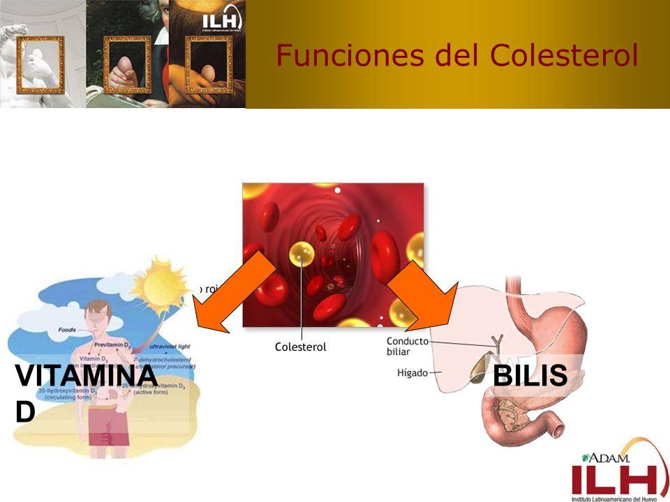 Funciones del Colesterol VITAMINA D BILIS