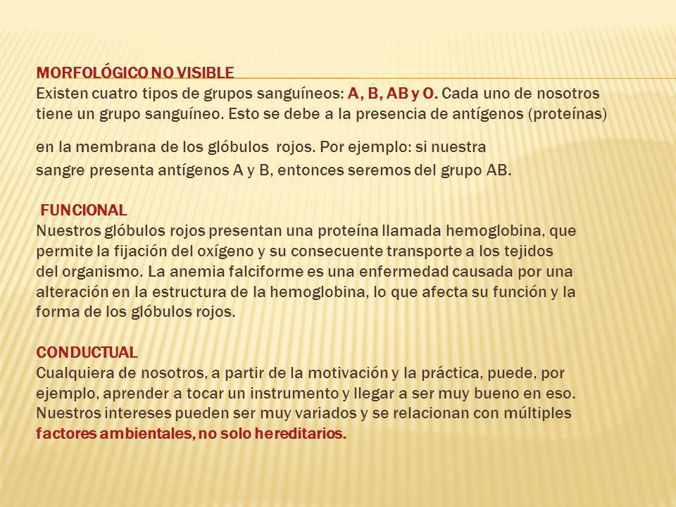 MORFOLÓGICO NO VISIBLE Existen cuatro tipos de grupos sanguíneos: A, B, AB y O.