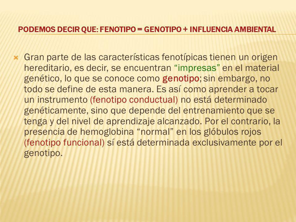 PODEMOS DECIR QUE: FENOTIPO = GENOTIPO + INFLUENCIA AMBIENTAL Gran parte de las características fenotípicas tienen un origen hereditario, es decir, se encuentran impresas en el material genético, lo que se conoce como genotipo; sin embargo, no todo se define de esta manera.