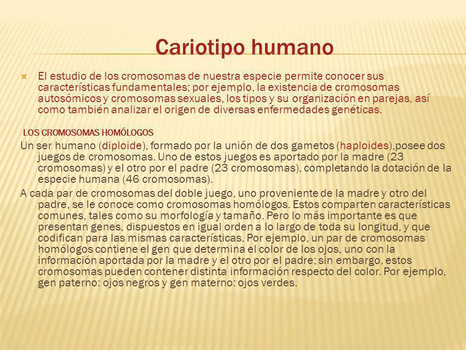 Cariotipo humano El estudio de los cromosomas de nuestra especie permite conocer sus características fundamentales; por ejemplo, la existencia de crom