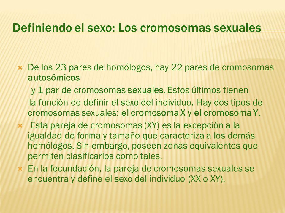 Definiendo el sexo: Los cromosomas sexuales De los 23 pares de homólogos, hay 22 pares de cromosomas autosómicos y 1 par de cromosomas sexuales.