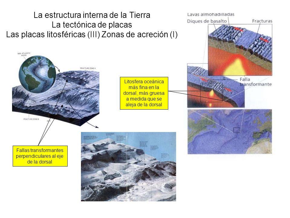 La estructura interna de la Tierra La tectónica de placas Las placas litosféricas (III) Zonas de acreción (I) Litosfera oceánica más fina en la dorsal