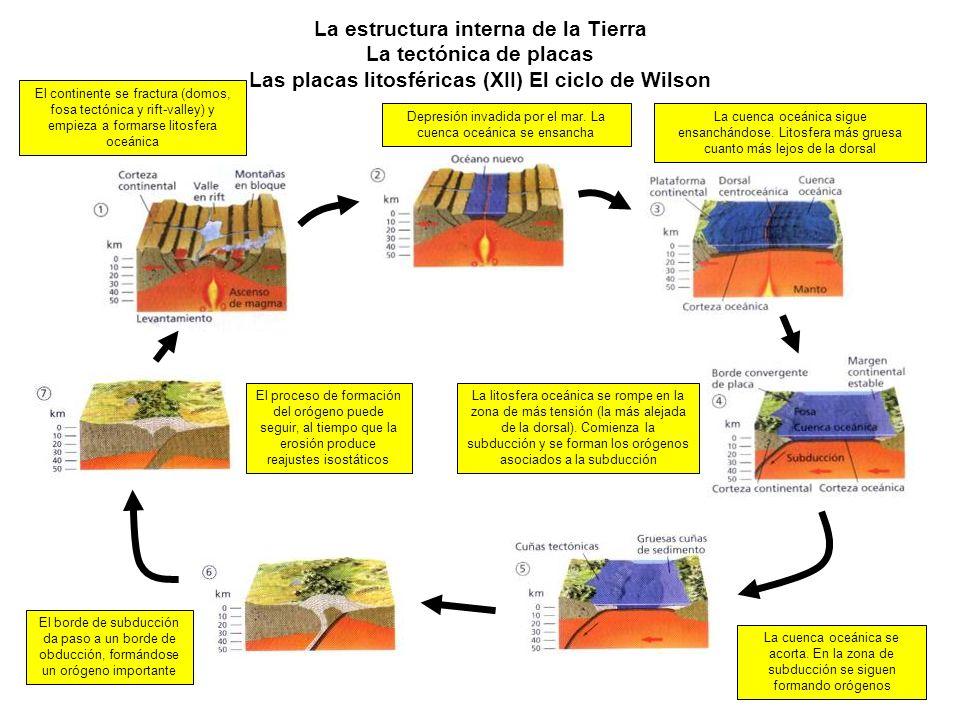 La estructura interna de la Tierra La tectónica de placas Las placas litosféricas (XII) El ciclo de Wilson El continente se fractura (domos, fosa tect