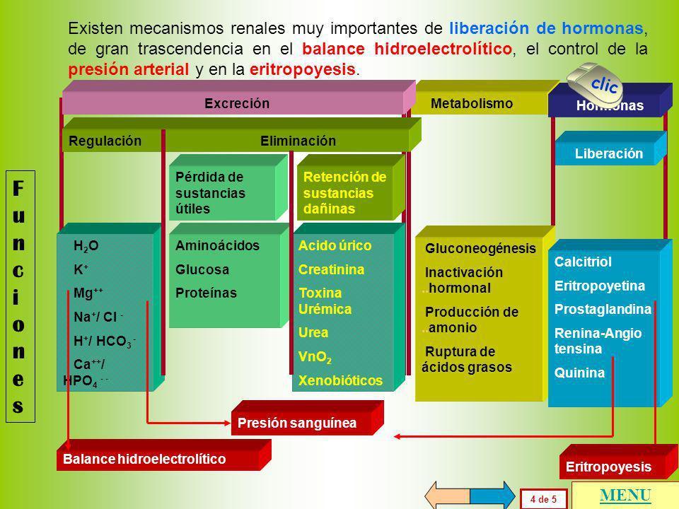 FuncionesFunciones En las pantallas anteriores se ha descrito la excreción renal, como fenómenos de regulación y de eliminación, que deben ser diferen