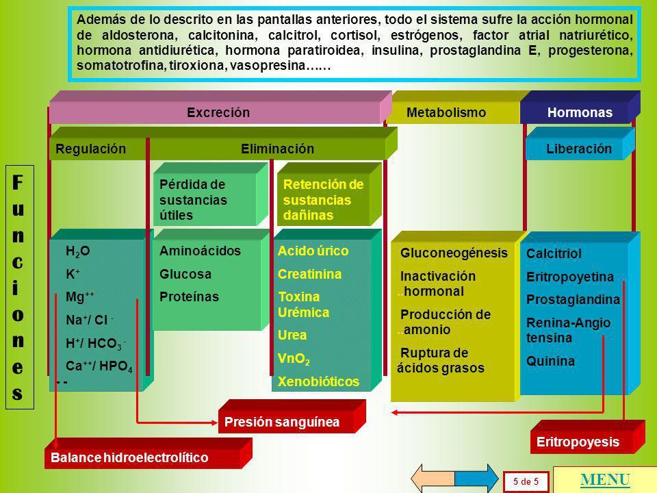 FuncionesFunciones 4 de 5 Existen mecanismos renales muy importantes de liberación de hormonas, de gran trascendencia en el balance hidroelectrolítico